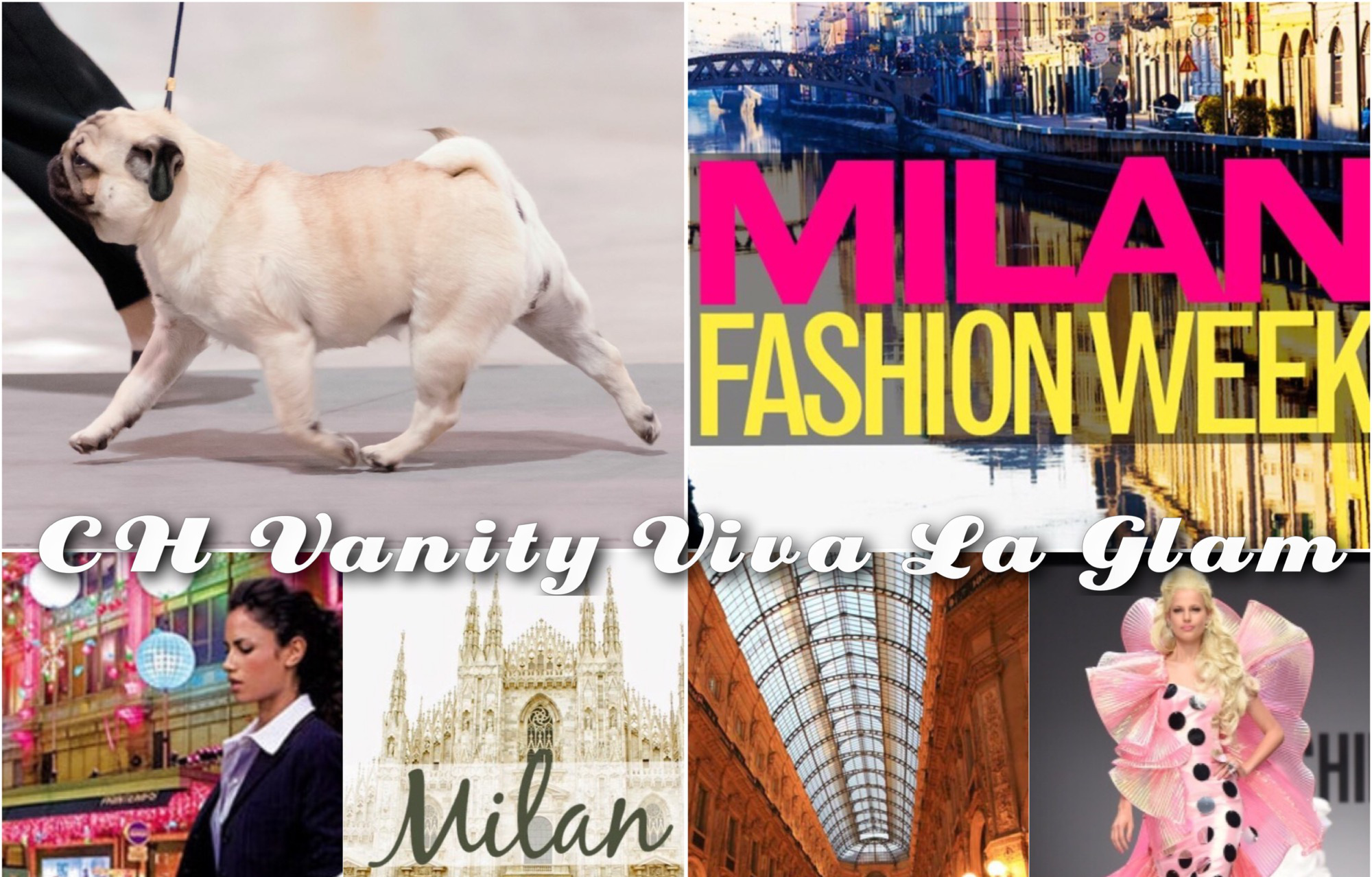 Vanity Pugs Bred-By Milan Pug Champion collage